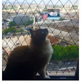 empresas que instalam tela de proteção para gatos Guararema